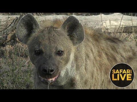 safariLIVE - Sunrise Safari - December 2, 2018