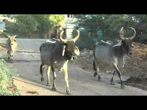 On The Road: Tribes of Gujarat - Six Days in Gujarat