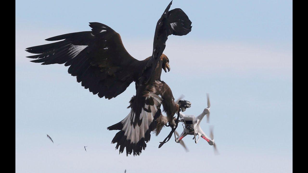 Что будет если на мини квадрокоптере подлететь к птицам?