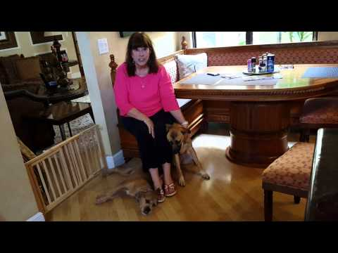 Dog Training Reviews In Fort Lauderdale