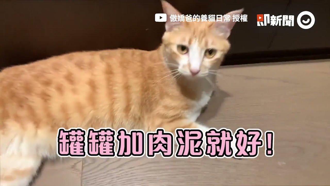 傲嬌爸轉奴才偷看貓咪學喵叫! 網封「原生貓」女兒:之前還嫌吵│寵物│貓咪|猫|ねこ│Pet│Cat│Kitten