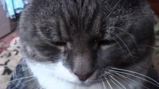Кот забавно дёргает усами