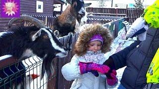 Развлечения зимой с детьми #2 Идем в зоопарк кормить животных кроликов лошадок и пони