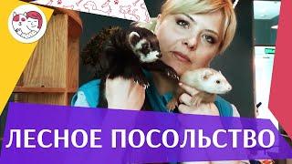 """Контактный зоопарк """"Лесное посольство"""" на ilikepet"""