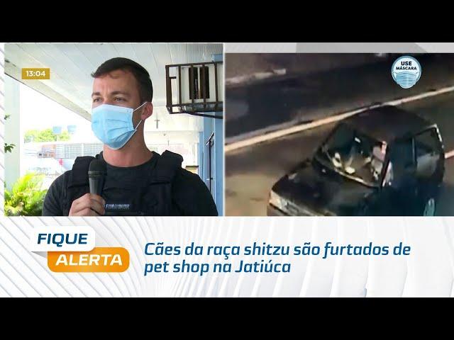 Cães da raça shitzu são furtados de pet shop na Jatiúca