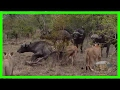 Craziest Animal Attacks ❖ Most amazing Wild Animal Fights in India #287