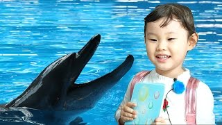 돌고래와 춤을?? 홍콩오션파크 2편 롤러코스터 아틱블라스트 크리스마스 체험 Playground Family Fun for Kids|香港海洋公园
