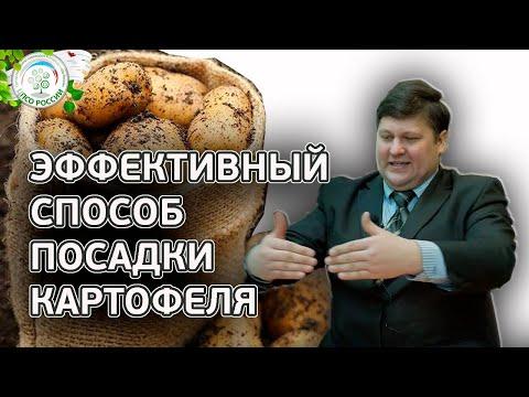 КАРТОФЕЛЯ БУДЕТ В 2 РАЗА БОЛЬШЕ ЕСЛИ ПОСАДИТЕ ТАКИМ СПОСОБОМ. Как посадить картофель. | выращивание | картофеля | картофель | вырастить | посадка | сажать | россии | огород | овощи | цпсо