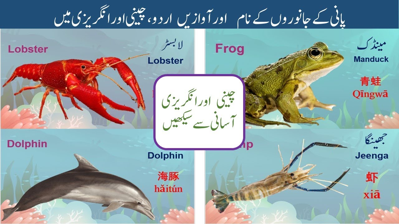 Learn Water Animals Sounds And Names In Urdu Chinese And English پانی کے جانوروں کے نام آوازیں Youtube