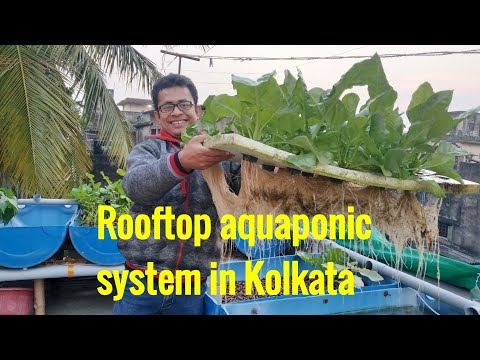 Rooftop aquaponic system in Kolkata