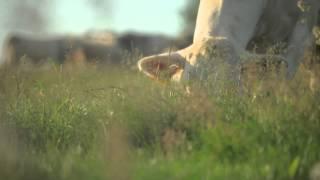 À votre avis, une vache pollue ?