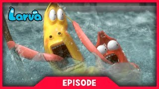 LARVA - FLOOD | Cartoon Movie | Cartoons For Children | Larva Cartoon | LARVA Official