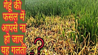 Usage of Weedicide in Wheat Crops।