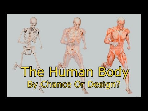 The Human Body Designed By Chance Or Intelligient Design Creation vs Evolution Debate Is There A God