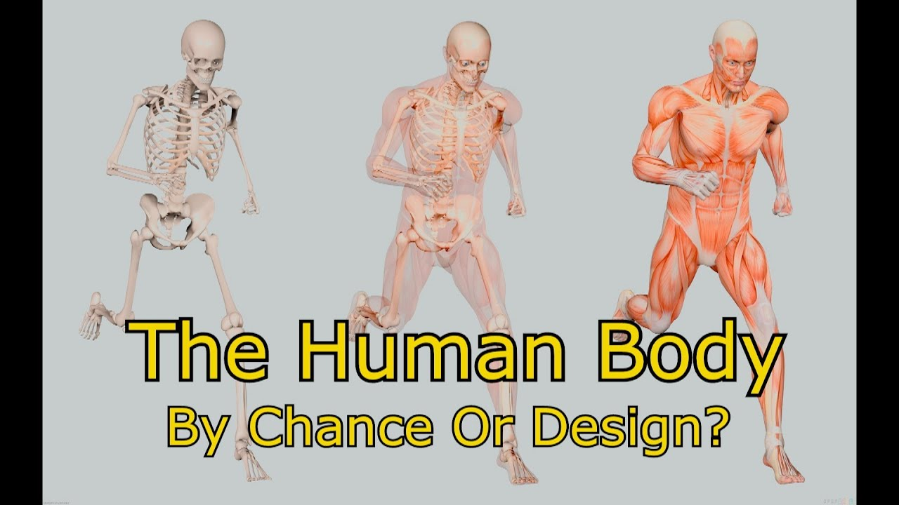 The Human Body Designed By Chance Or Intelligient Design Creation Vs