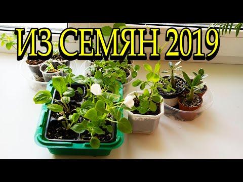 Комнатные растения из семян 2019. 🌺 [Надежда и мир]