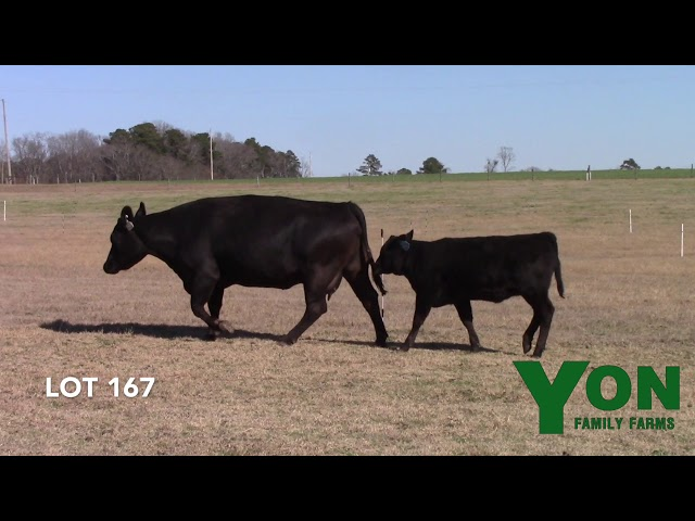 Yon Family Farms Lot 167