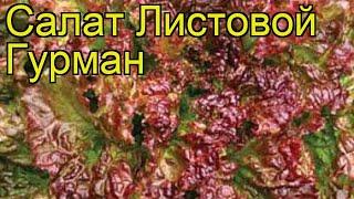 Салат листовой Гурман. Краткий обзор, описание характеристик, где купить семена Gurman