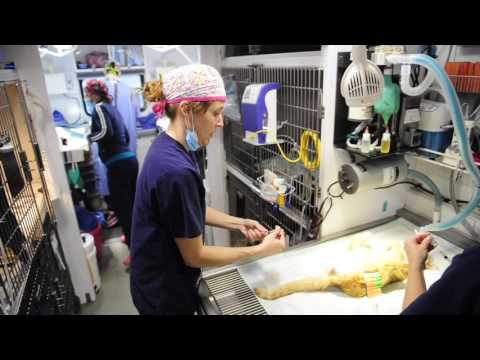 VIDEO: Spay Shuttle Offers Free Spaying And Neutering