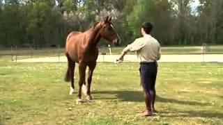 Cheval Pratique - L'éducation du cheval avec Manu