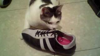 臭くないの…?靴のニオイにメロメロになっちゃったニャンコ