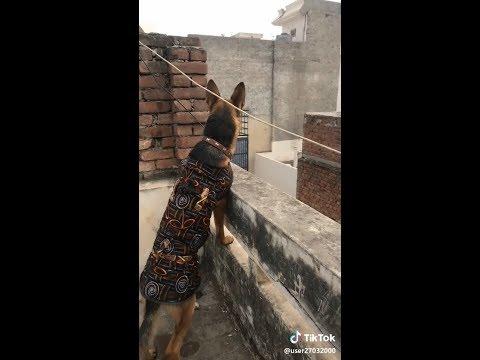 ഈ പട്ടികളെല്ലാം കൂടി ചിരിപ്പിച്ചു കൊല്ലും | Best Dogs Puppy TikTok Malayalam Dubmsash