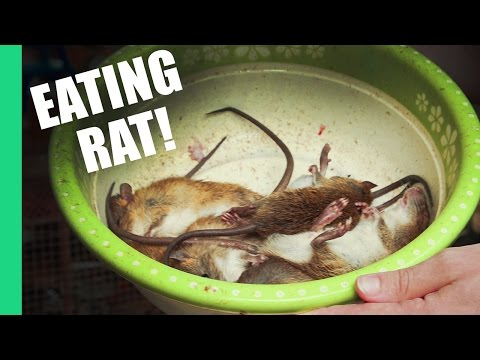 Eating Rat in Vietnam