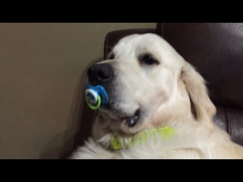 Dog Refuses to Give Up Pacifier