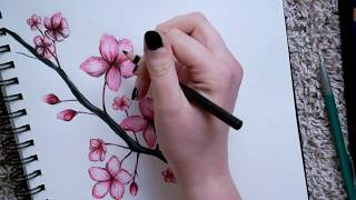 ..drawing cherry blossoms..
