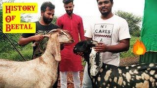 History of Pure Quality Beetal Goats by Mr. Ashraf Ali | Extreme Goat Farm