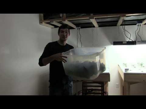 29 Day Greens - How Profitable is Indoor Hydoponics?