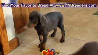Doberman Pinscher, Puppies , For, Sale, In Staten Island, New York, Ny, Brooklyn, County, Borough