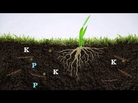 Getting POWERFUL  organic  FERTILIZER  FREE $ from your backyard.