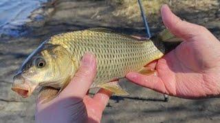 Рыбалка 3 мая 2021г Сазаны карасики на озере вблизи г Тюмень