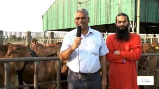 Sahiwal cows Kamdhenu Gaushala Dr Ranvir Singh IVRI