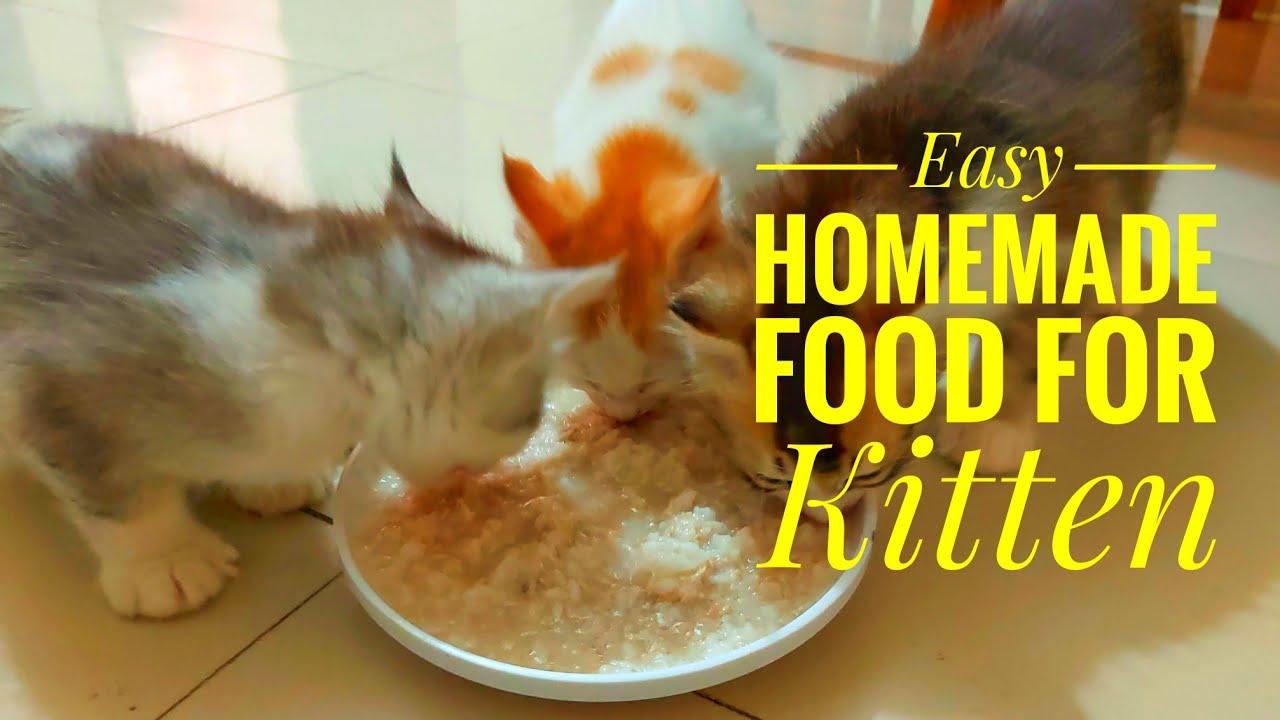 Kitten Food - Easy Homemade Cat Food