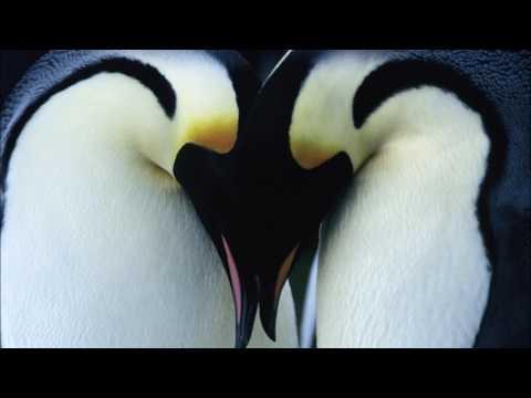 🎵 Alex Wurman - Found Love 🎵
