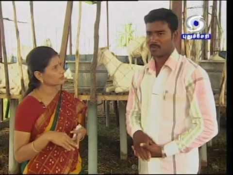 tamilnadu goat farm anand interview...part 1