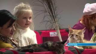 Выставка кошек в Тирасполе