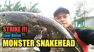 STRIKE !!! MONSTER IKAN GABUS SNAKEHEAD || Casting Ikan Gabus Snakehead #24 Belitung