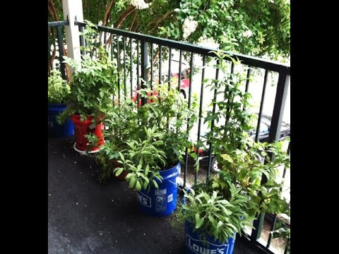 Balcony Gardening And Indoor Gardening