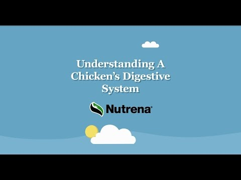 Poultry Digestive System Tour
