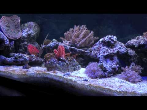 220 liter meerwasser aquarium w rfel 60x60x60 mit unter doovi. Black Bedroom Furniture Sets. Home Design Ideas