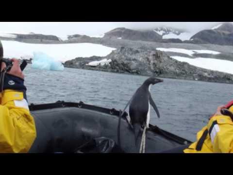 Walk in the Park: Kayaking in Antarctica!