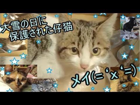 吹雪の中凍えそうな仔猫を保護(='x'=)