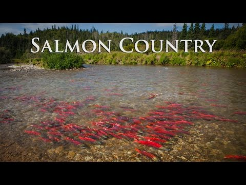 Alaska Salmon Country - Sockeye City