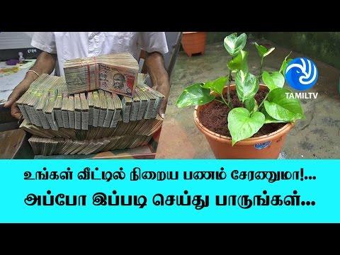 உங்கள் வீட்டில் நிறைய பணம் சேரணுமா!... அப்போ இப்படி செய்து பாருங்கள்... - Tamil TV