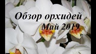 Орхидеи 3 недели без полива и ухода. Обзор МАЙ 2019