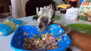 P'Ang le poussin : la macédoine en salade ?