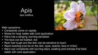 APIS MELLIFICA || HOMEOPATHIC REMEDY FOR HIVES, ITCH, OTHER ALLERGIC REACTIONS  // Homeo.ca